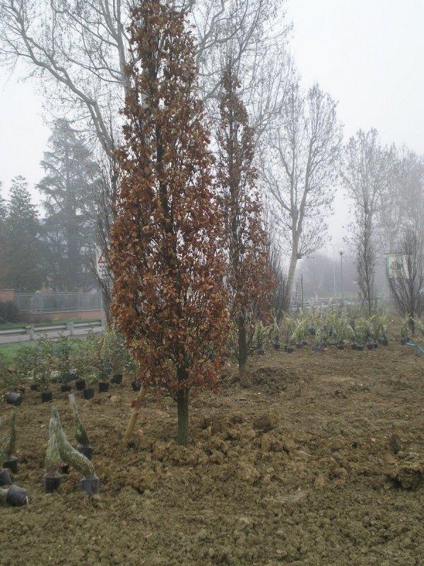 Posa alberi per verde pubblico