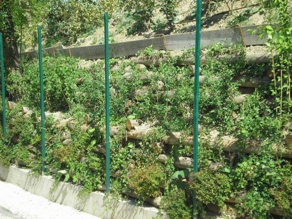 Creazione di zone verdi