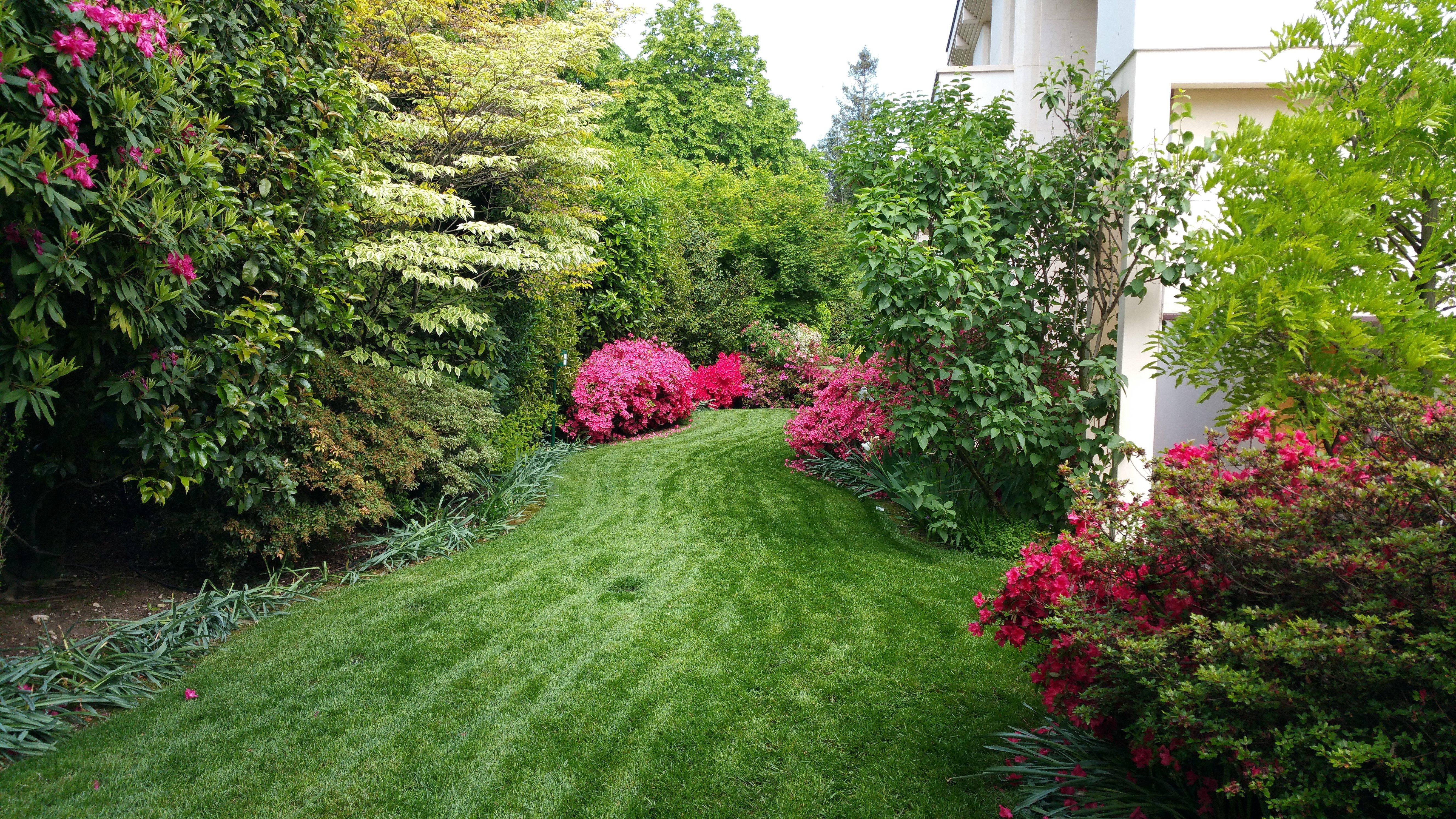 giardino verde con fiori e piante