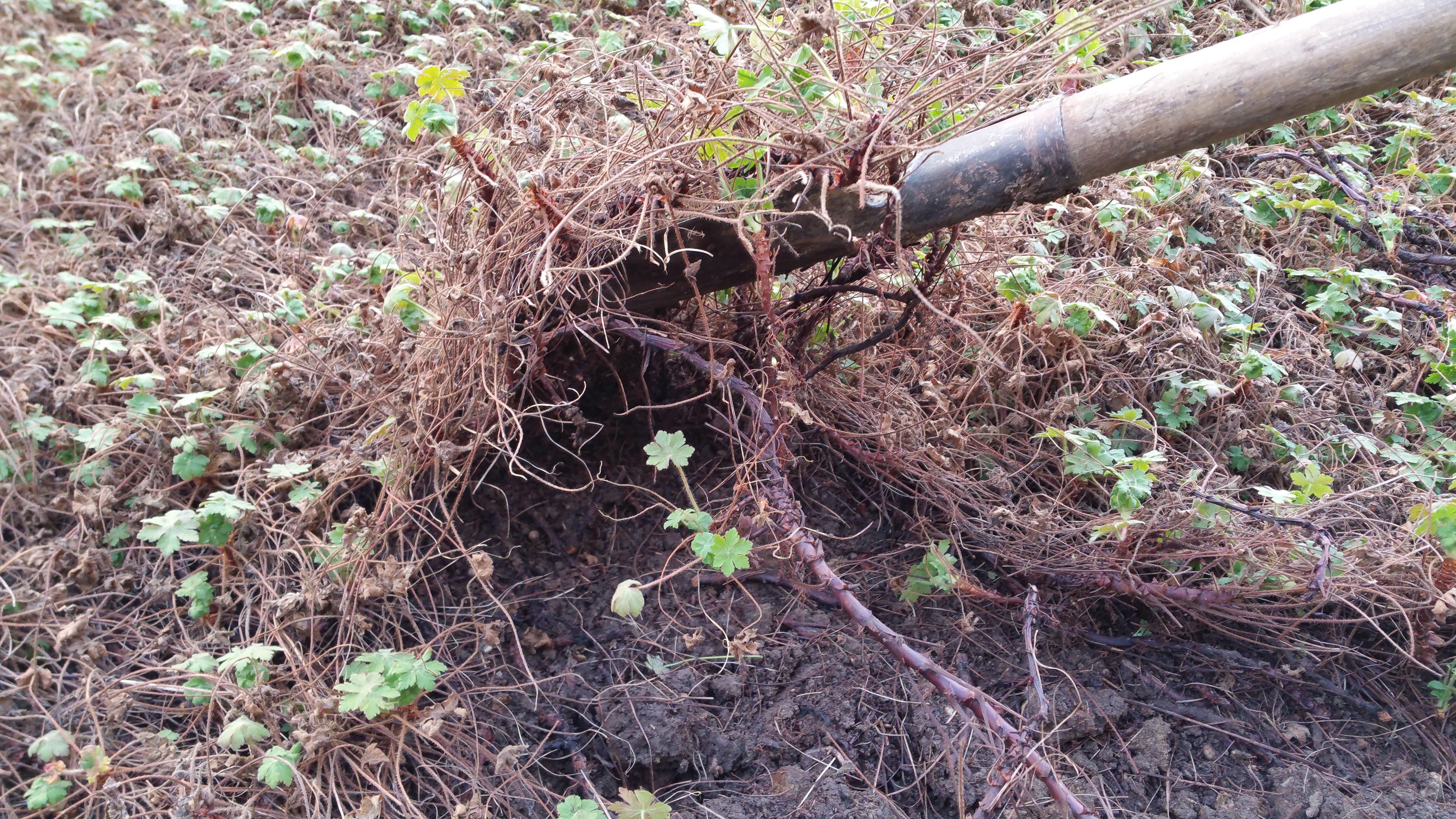 controllo tronco di un albero