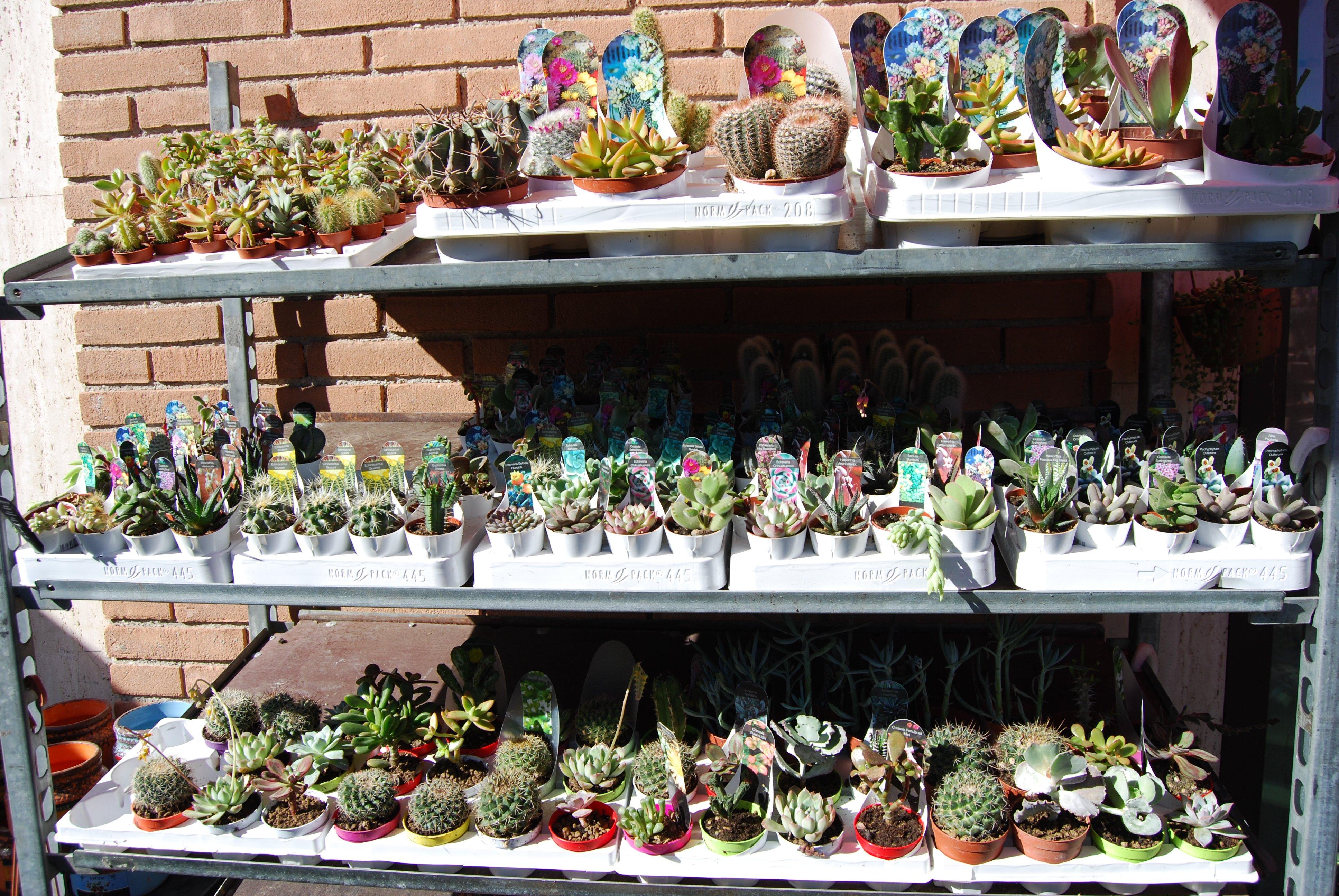 vasi di fiori in una fioriera