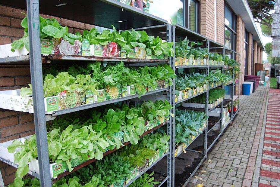 piante esposte sugli scaffali