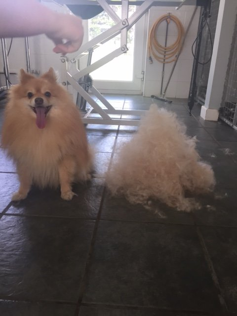 a pair of furry dogs