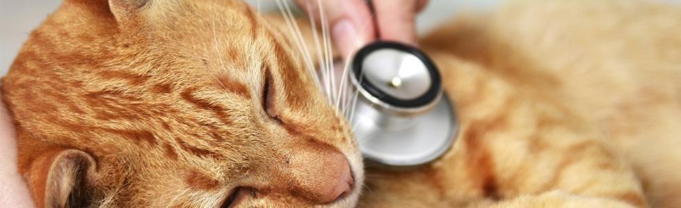visita veterinaria su gatto