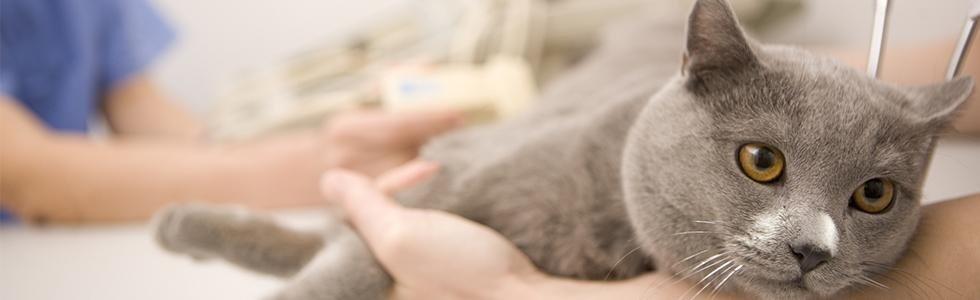 trattamenti veteriani su animale domestico