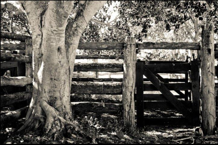 tree with fences