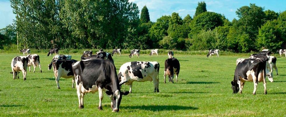 Allevamento bestiame e produzione latte