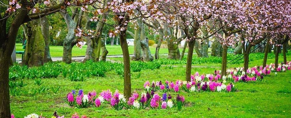 articoli giardinaggio Agrivega Genova
