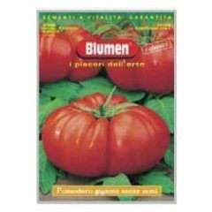 Pomodoro gigante senza semi