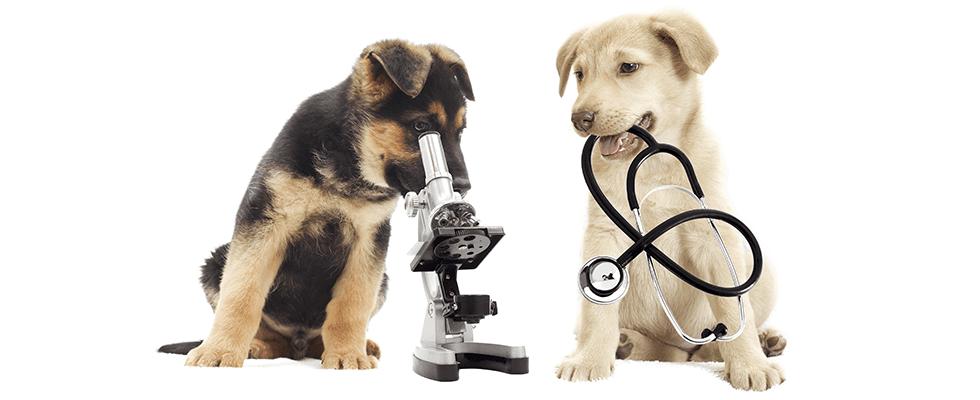 cura malattie animali