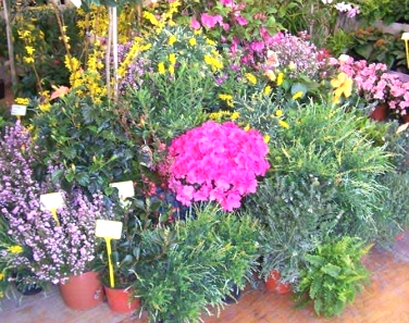 vendita fiori, piante fiorite