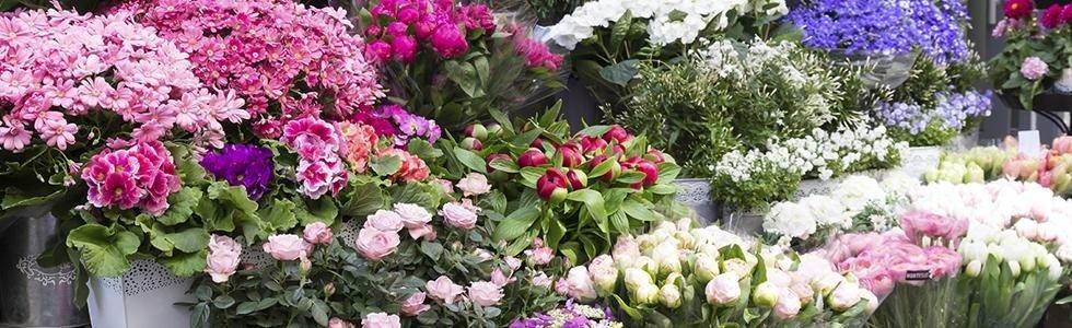 vendita fiori alia
