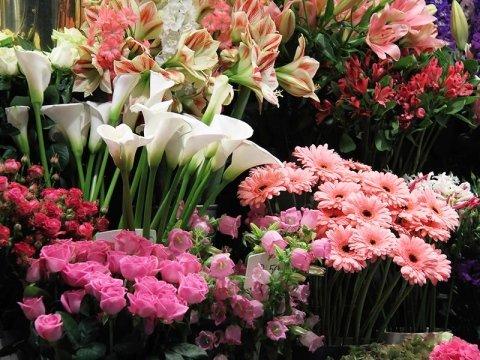 negozio fiori alia