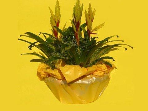 vendita piante alia