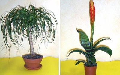 piante ornamentali