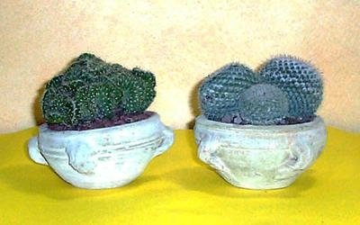 vendita piante grasse palermo