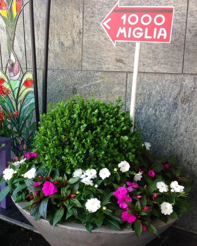 Mille miglia flowers