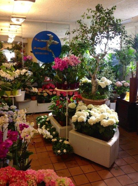 alloni, bouquet di fiori, piante, composizioni floreali per eventi