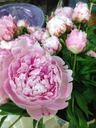 Composizioni di fiori freschi