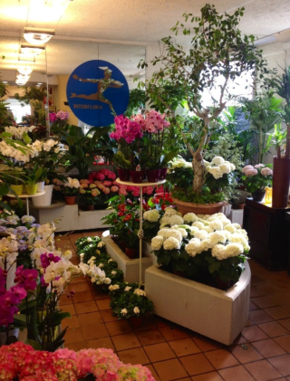 bonsai, orchidee, begonie, piante da interno