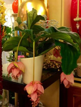 piante ornamentali verdi e fiorite