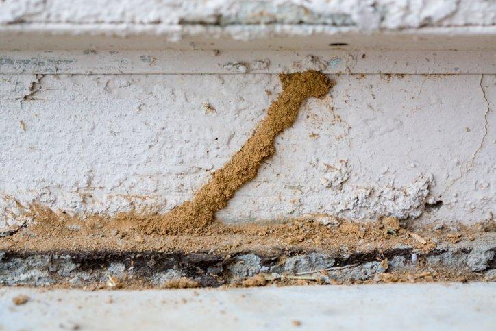 Termite Control College Station TX