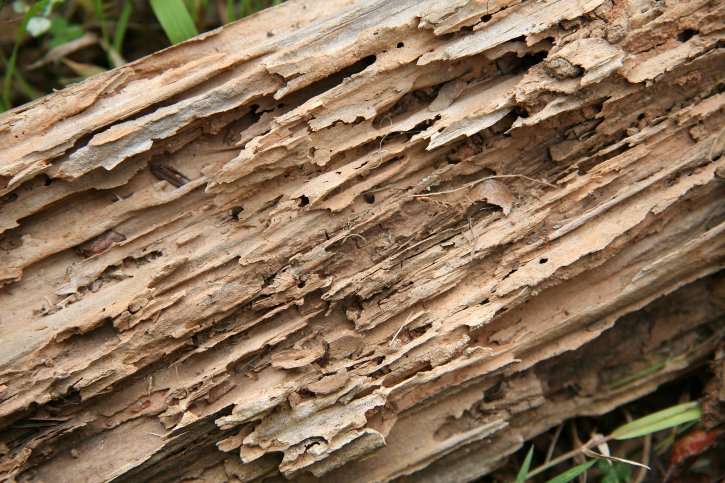 Termite Control Bryan TX