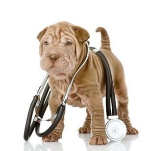 assistenza veterinaria