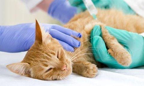 vaccinazione animali domestici