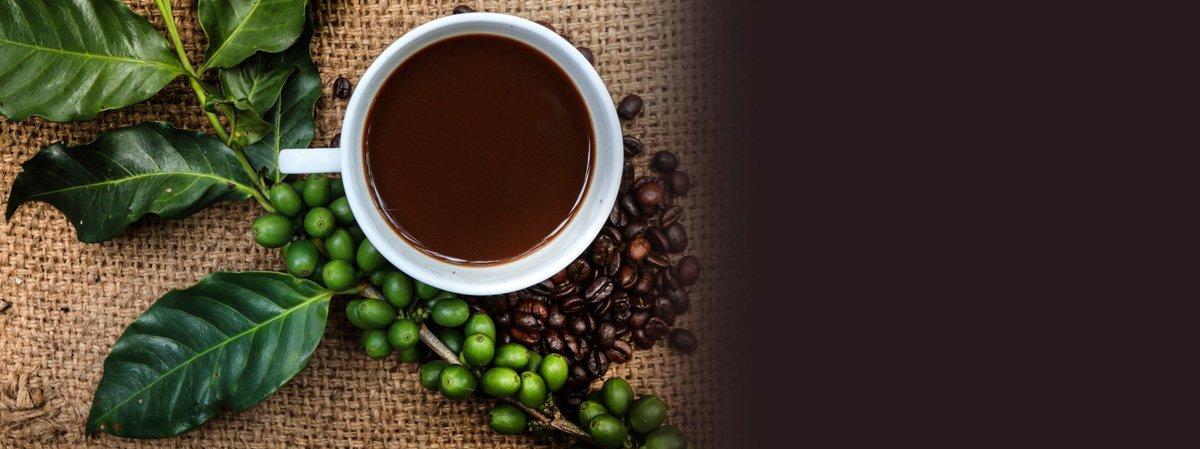 Coffee equipment rental in Newcastle