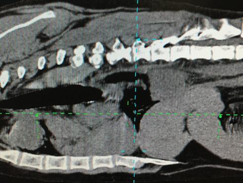 Esame radiologia Ospedale Masaccio