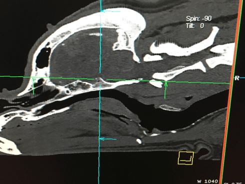 Radiologia per animali Firenze