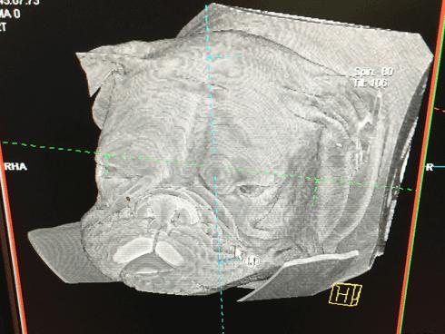 Radiologia veterinaria Ospedale Masaccio