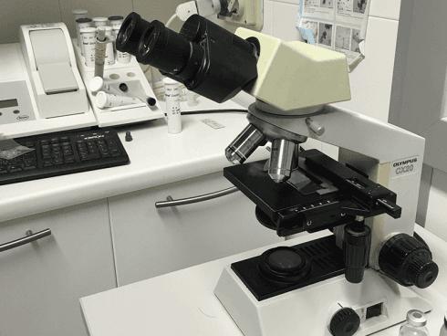 Apparecchiature per analisi veterinarie Ospedale Masaccio