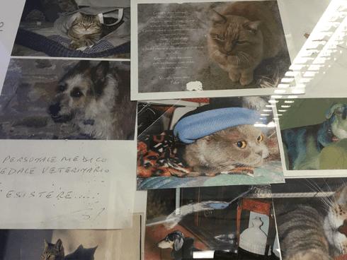 Medicina interna gatti