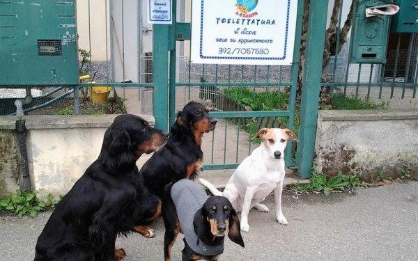 toelettatura cani e pulizia pavia