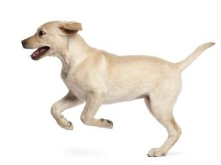 igienizzazione cani
