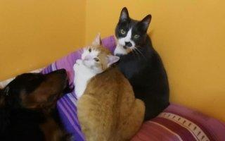 pensione gatti nel pavese