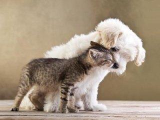 pulizia cani e gatti