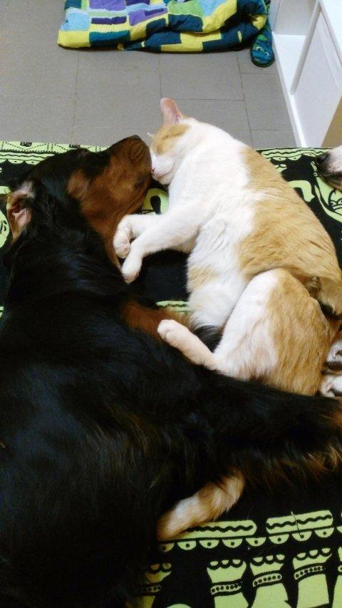 toelettatura gatti pavia
