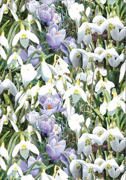 carta da regalo con immagine di fiori