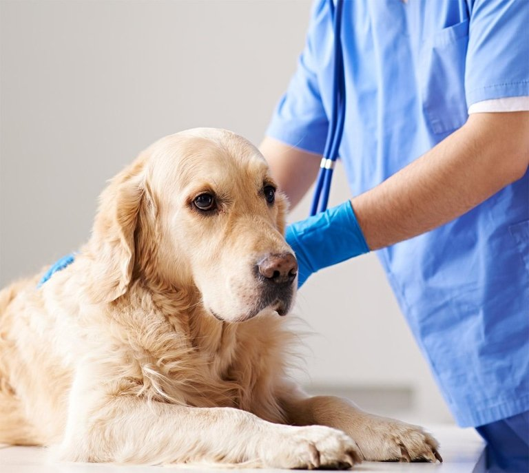 cane veterinario