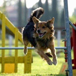 Addestramento cani a borgomanero