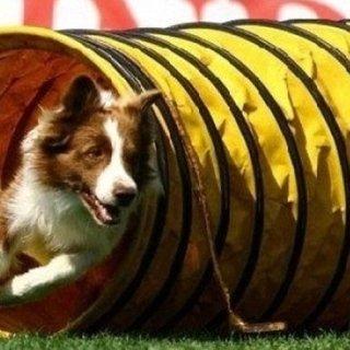 scuola addestramento cani borgomanero