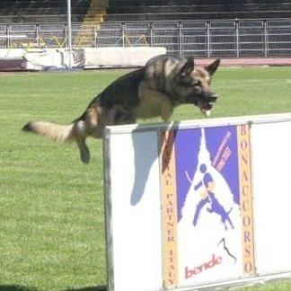addestramento cani per concorsi