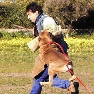 preparazione cani da difesa