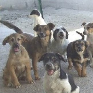 servizio di pensione per cani