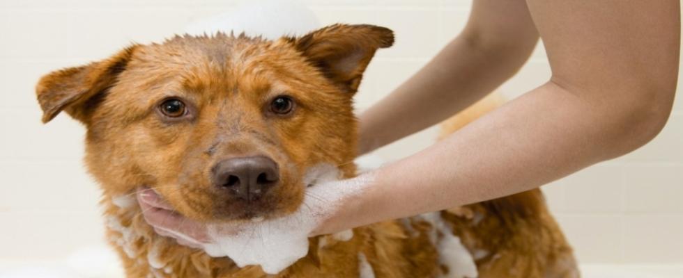 Pelomania Toilettatura canie e gatti
