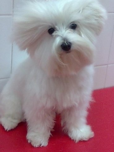 tagli per cani a pelo lungo
