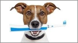 prodotti toeletta cane